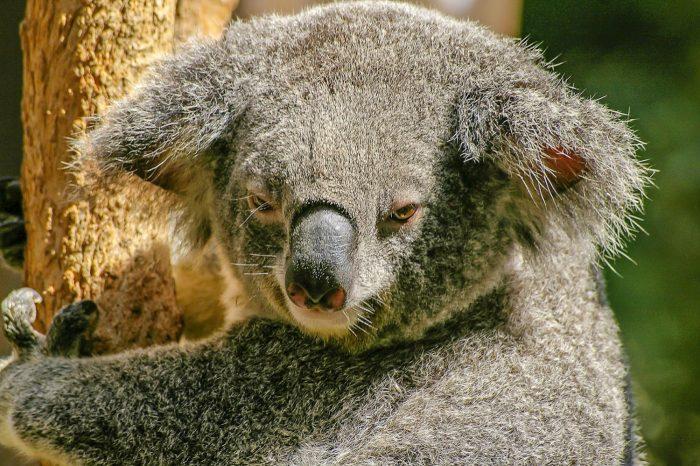 Australie reistips bezienswaardigheden en activiteiten