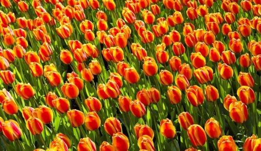 7 gekke Nederlandse dingen die je opvallen na een wereldreis