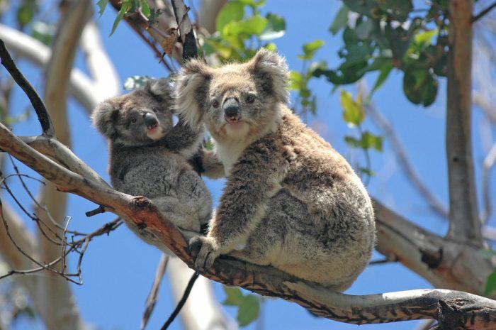 Groepsreis Australie 28 dagen