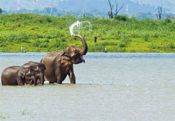 Prive rondreis Sri Lanka Mooiste van de Natuur 16 dagen