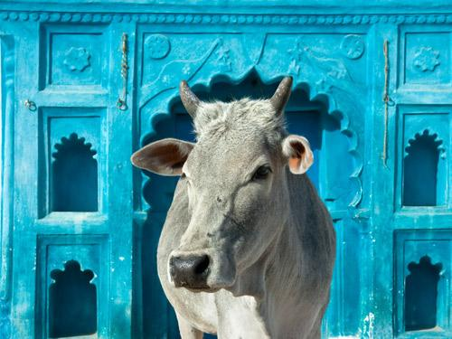 Single Reis Rajasthan & Varanasi India 17 dagen