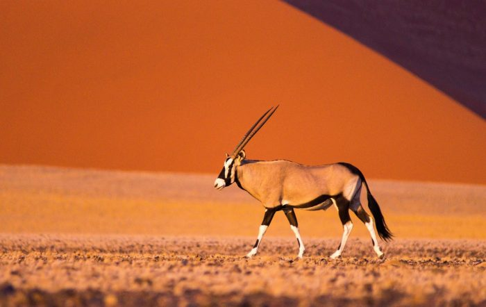 Rondreis Namibië Botswana en Zimbabwe 22 dagen