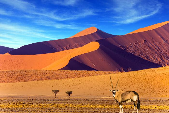 Vakanties en rondreizen Namibie