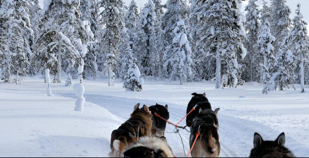Groepsrondreis Lapland Winter 8 dagen Finland - Sneeuwsafari nabij de poolcirkel
