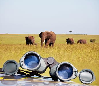 Individuele Autoreis Zuid-Afrika 21 dagen - Beleef de Highlights van Zuid-Afrika