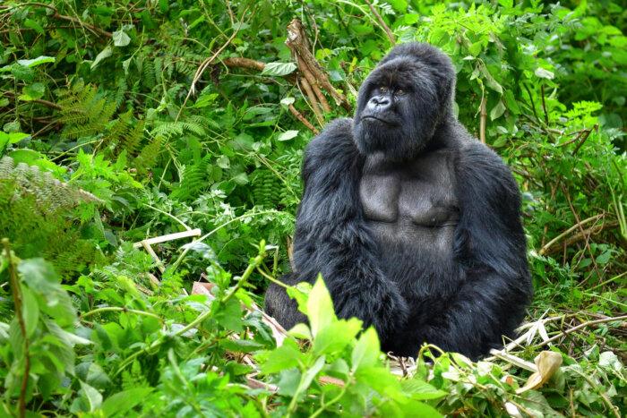 Vakantie Oeganda rondreizen