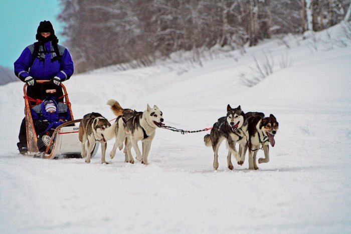 Familiereis Lapland Winter groepsreis 8 dagen Finland
