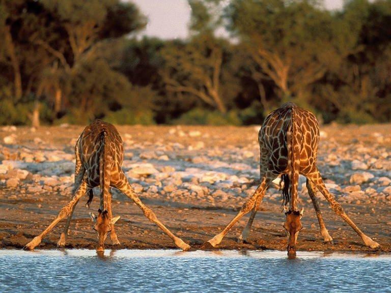 18-daagse privé autorondreis Namibië - Klassiek Namibië - superior