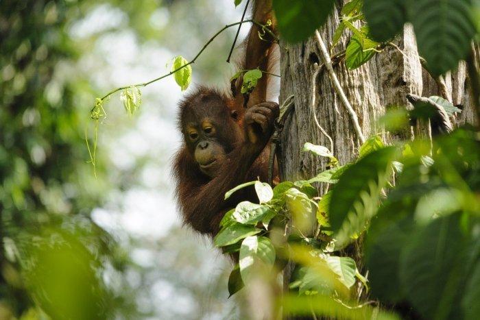 15-daagse privé rondreis Indonesië