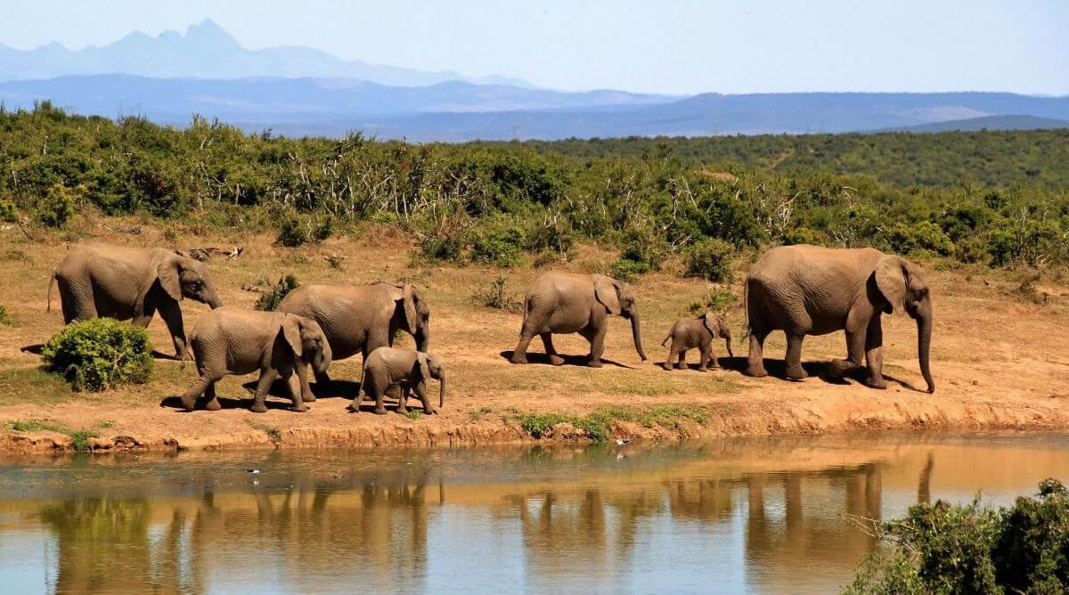 Vakantie naar Zuid Afrika