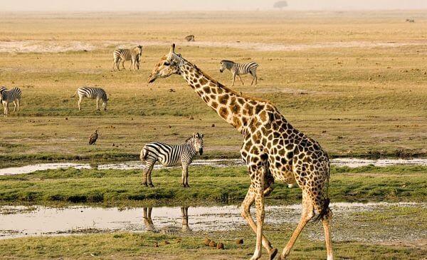 Privé rondreis Botswana en Zambia 18 dagen.jpg