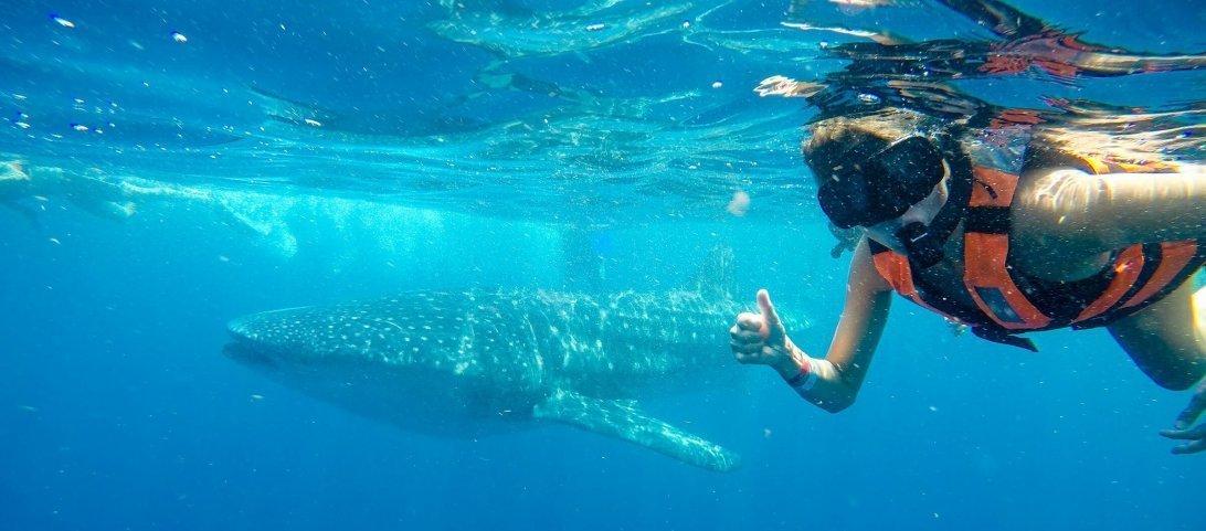 Zwemmen-met-walvishaaien-in-Mexico