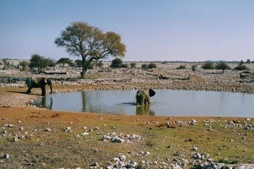 24-daagse autorondreis Namibië en Botswana
