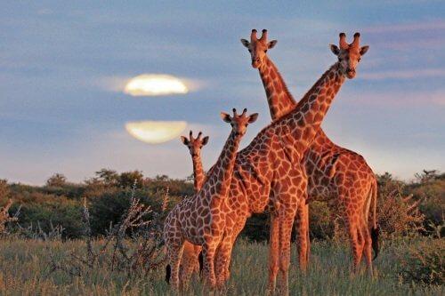 camperrondreis Zuid-Afrika, Botswana en Namibië 29 dagen