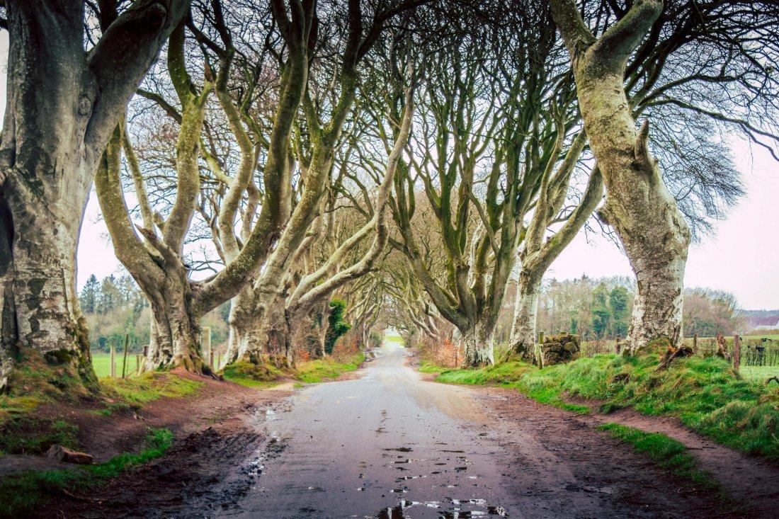 #2 Dark Hedges, Ballymoney, Noord Ierland De weg van King's Landing