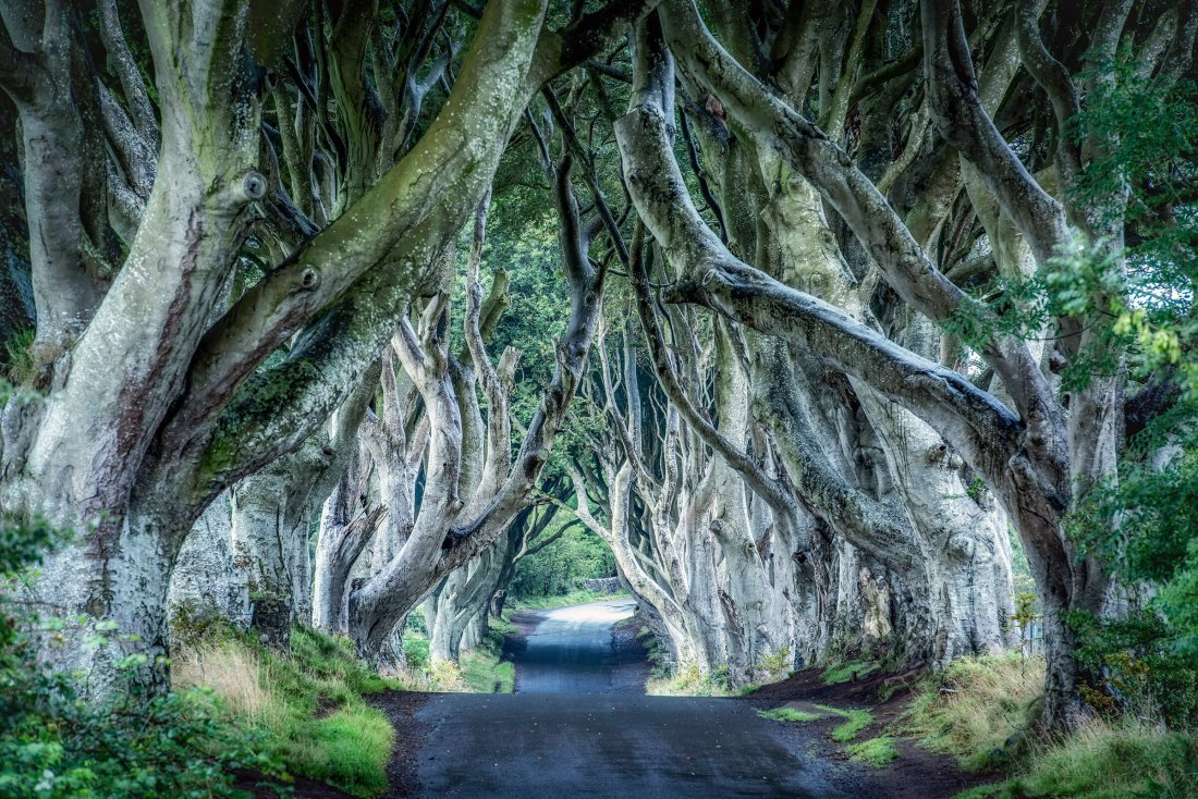 #2 Dark Hedges, Stranocum, United Kingdom The Road From King's Landing
