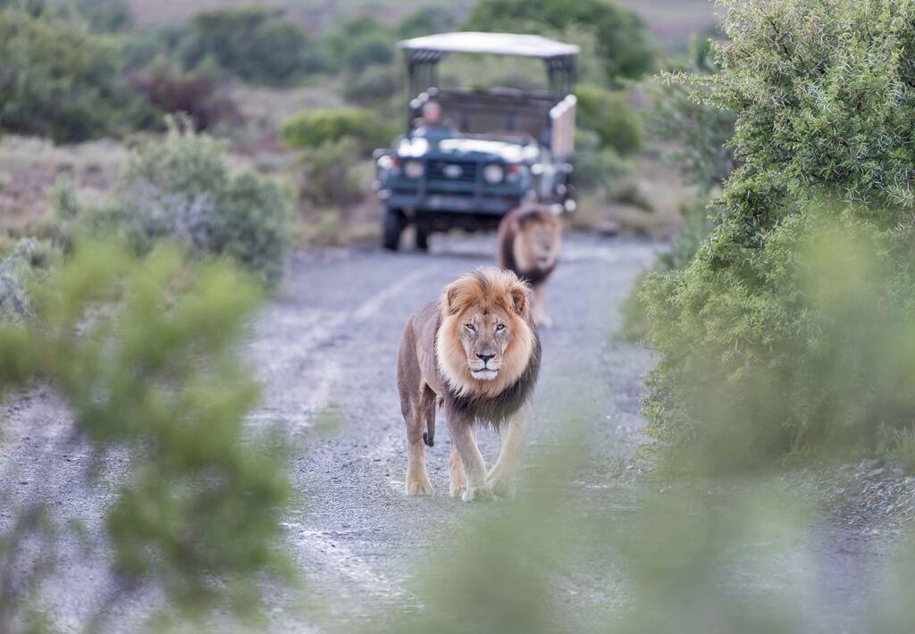 15-daagse familie groepsreis Zuid-Afrika & Mauritius - Wildrijk Zuid-Afrika & Paradijselijk Mauritius