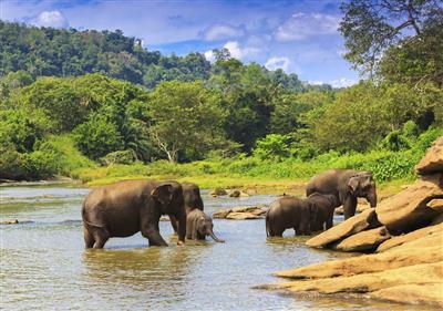 15-daagse individuele reis Sri Lanka met gids chauffeur