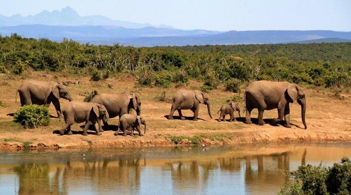elephant 279505 1280