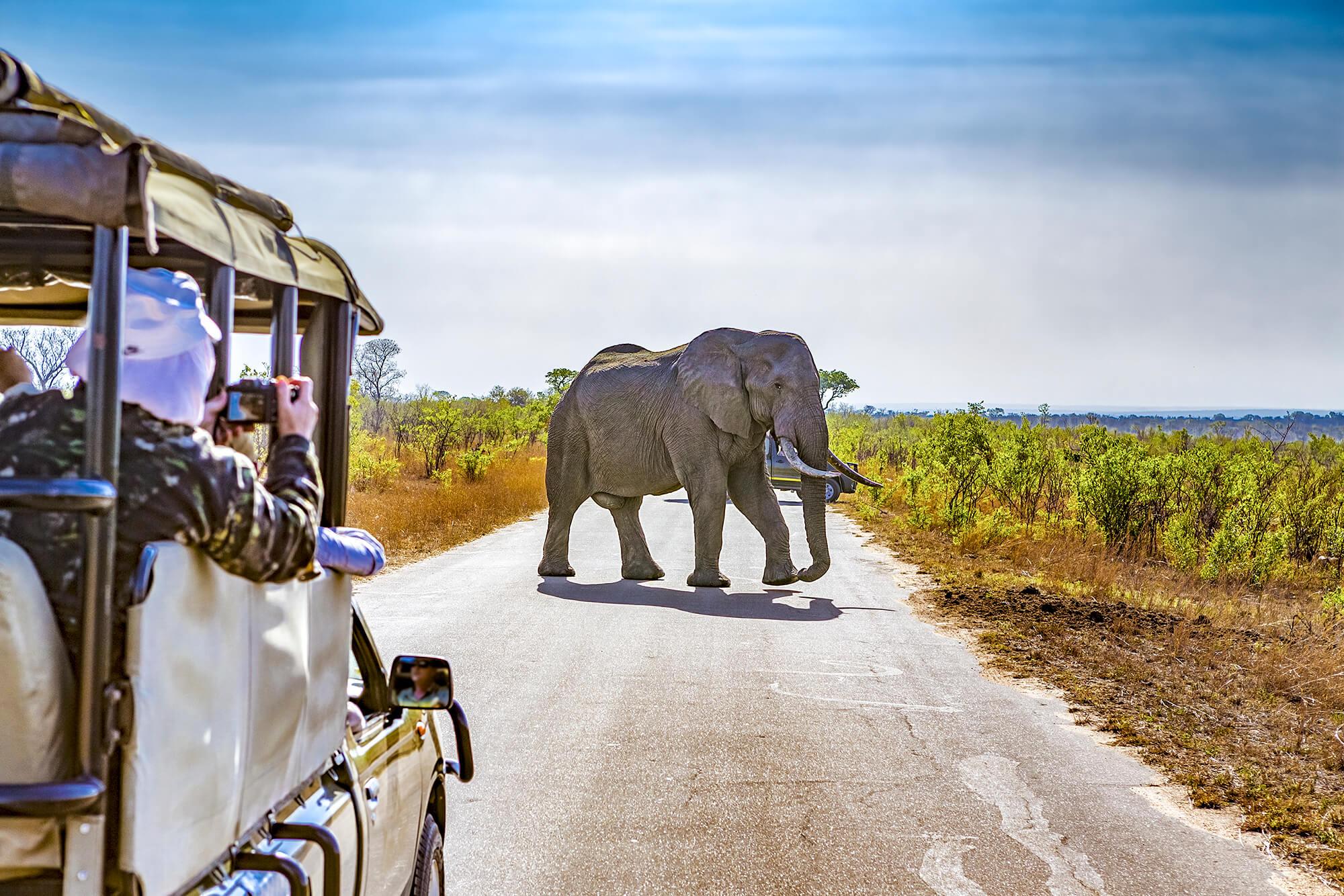 Zuid-Afrika Safari in Kruger National Park