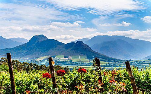 Individuele fly-drive Zuid-Afrika 16 dagen - Safari's, zee en wijngaarden