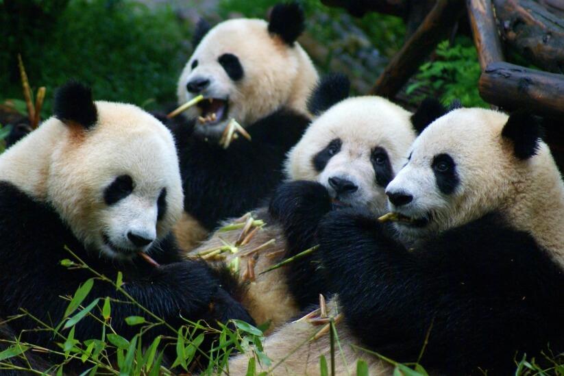 Privé familiereis China 16 dagen - China rondreis familie