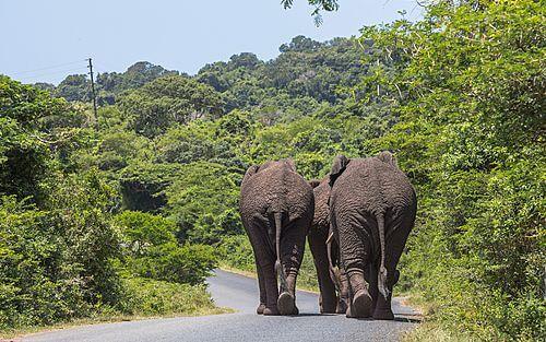 Privé fly-drive Zuid-Afrika 16 dagen - Safari's op Tsonga bodem