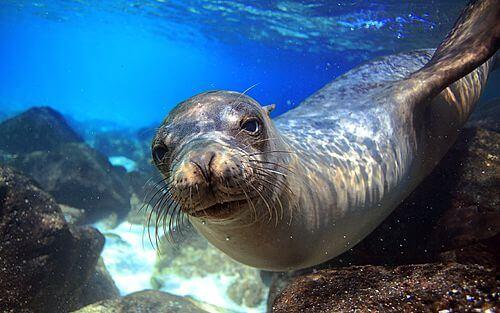 Privé rondreis Ecuador 9 dagen - Ontdek de Galapagos Eilanden