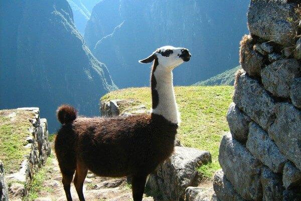 Privé rondreis Peru 19 dagen