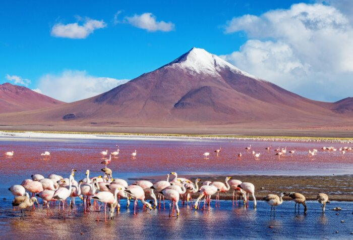 Bolivia tips reizen