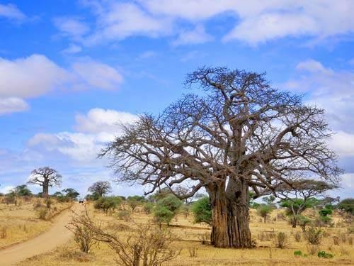 Groepsrondreis Gambia & Senegal 15 dagen