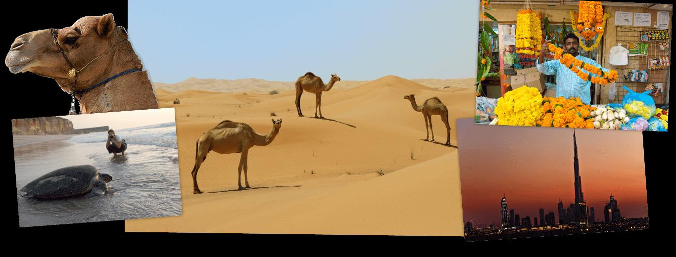 Groepsrondreis Oman en Dubai 12 dagen - Het beste van het Midden-Oosten