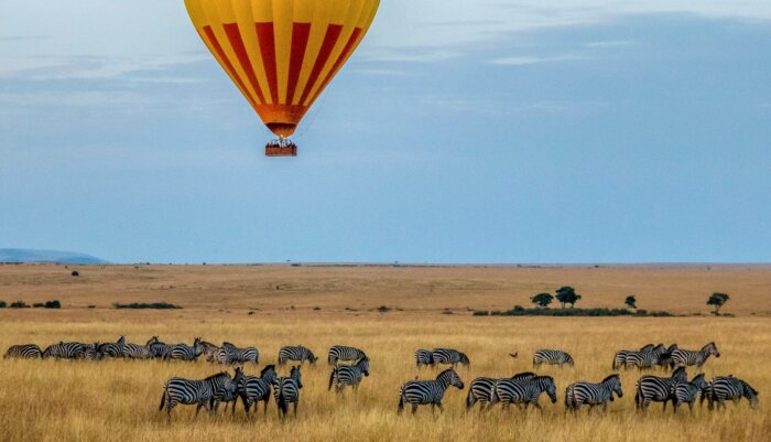 Top 5 Safari's in Afrika Welk land kies je en waarom