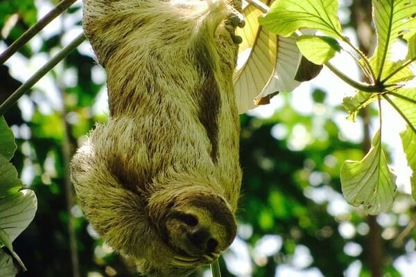 Individuele 16 daagse autorondreis Costa Rica