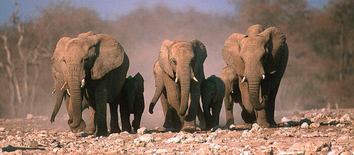 Individuele autorondreis Namibië 20 dagen