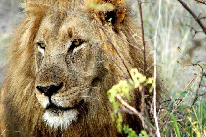 Individuele autorondreis Zuid-Afrika 15 dagen