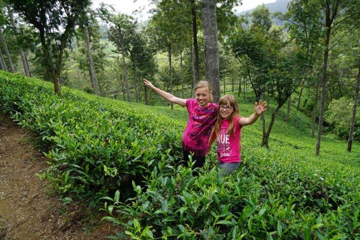Individuele gezinsrondreis Sri Lanka 18 dagen