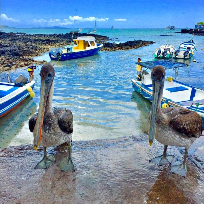 Privé rondreis Galapagos eilanden 5 dagen - Ecuador