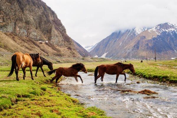 Privé rondreis Georgië en Armenië 17 dagen