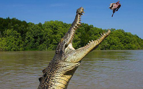 9-Daagse individuele autorondreis Australië - Ontdek wilde natuur in het Northern Territory met de auto