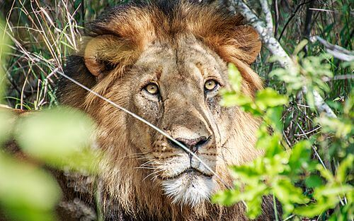 Individuele autorondreis Zuid-Afrika 17 dagen - Safari's in Krugerpark, Koninkrijk Eswatini en ontspannen aan de kust