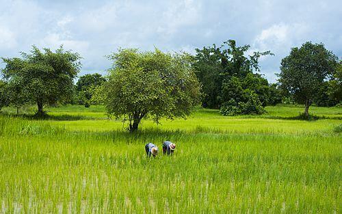 Privé rondreis 17 dagen Cambodja