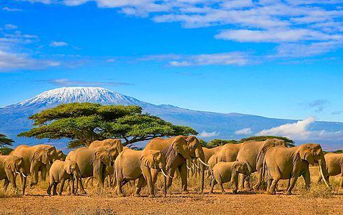 Privé rondreis Tanzania 15 dagen