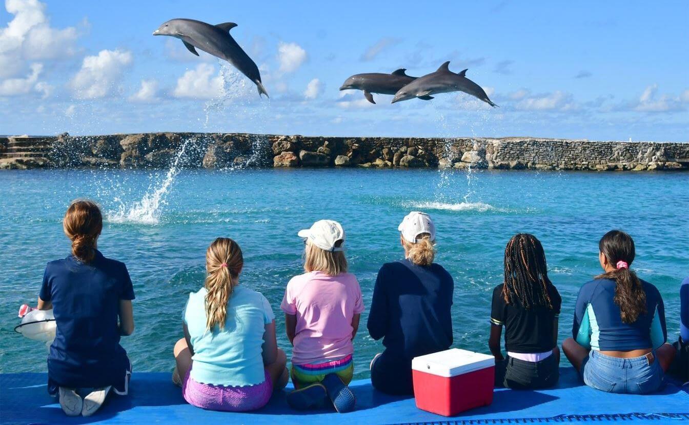 Zwemmen met dolfijnen op Curacao bij Dolphin Academy